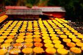 【國內旅遊】柿子紅了。最美的九降風橘@新埔衛味佳柿餅園:新埔衛味佳柿餅園 (93).jpg