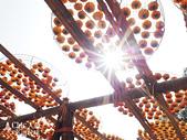 【國內旅遊】柿子紅了。最美的九降風橘@新埔衛味佳柿餅園:新埔衛味佳柿餅園 (99).jpg
