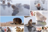 白馬村HAKUBA 47-Snow Mobile & Snow Rafting:長野縣3-1--地獄谷野猿公苑.jpg