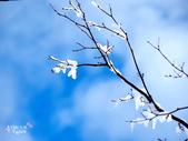 日光奧奧女子旅。奧日光散策SKI:奧日光-湯元溫泉SKI場 (23).jpg