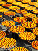 【國內旅遊】柿子紅了。最美的九降風橘@新埔衛味佳柿餅園:新埔衛味佳柿餅園 (65).jpg
