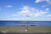 北海道道北。島旅。礼文島:金田海岬-斑海豹曬日光浴 (9).jpg