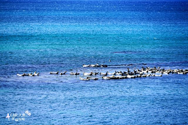 金田海岬-斑海豹曬日光浴 (32).jpg - 北海道道北。島旅。礼文島