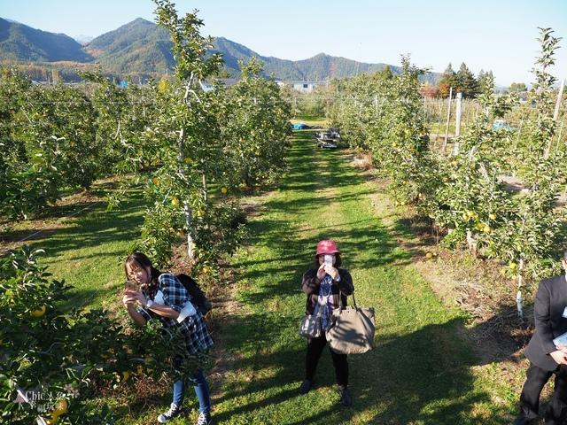 長野松川市東印平林農園採蘋果體驗 (88).jpg - 長野安曇野。東印平林農園蘋果園採蘋果りんご狩り