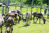 北海道道北。我在北緯45度遇見日本最北馴鹿TONAKAI牧場:北海道名寄馴鹿觀光牧場 (26).JPG