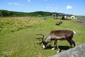 北海道道北。我在北緯45度遇見日本最北馴鹿TONAKAI牧場:北海道名寄馴鹿觀光牧場 (21).JPG