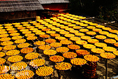 【國內旅遊】柿子紅了。最美的九降風橘@新埔衛味佳柿餅園:新埔衛味佳柿餅園 (94).jpg