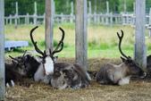 北海道道北。我在北緯45度遇見日本最北馴鹿TONAKAI牧場:北海道名寄馴鹿觀光牧場 (39).JPG