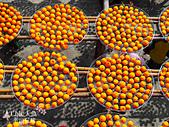 【國內旅遊】柿子紅了。最美的九降風橘@新埔衛味佳柿餅園:新埔衛味佳柿餅園 (63).jpg
