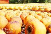【國內旅遊】柿子紅了。最美的九降風橘@新埔衛味佳柿餅園:新埔衛味佳柿餅園 (119).jpg