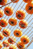【國內旅遊】柿子紅了。最美的九降風橘@新埔衛味佳柿餅園:新埔衛味佳柿餅園 (123).jpg