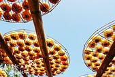 【國內旅遊】柿子紅了。最美的九降風橘@新埔衛味佳柿餅園:新埔衛味佳柿餅園 (128).jpg