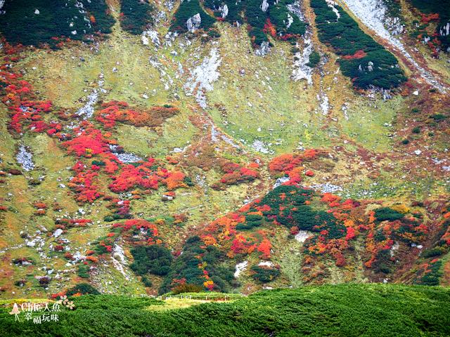 立山-4-室堂平 (63).jpg - 富山県。立山黑部