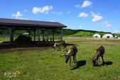 北海道道北。我在北緯45度遇見日本最北馴鹿TONAKAI牧場:北海道名寄馴鹿觀光牧場 (30).JPG