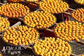 【國內旅遊】柿子紅了。最美的九降風橘@新埔衛味佳柿餅園:新埔衛味佳柿餅園 (68).jpg