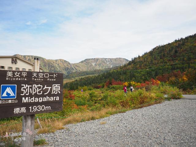 立山-3-彌陀之原 (76).jpg - 富山県。立山黑部