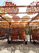 【國內旅遊】柿子紅了。最美的九降風橘@新埔衛味佳柿餅園:新埔衛味佳柿餅園 (95).jpg