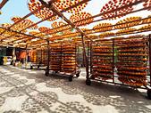 【國內旅遊】柿子紅了。最美的九降風橘@新埔衛味佳柿餅園:新埔衛味佳柿餅園 (96).jpg