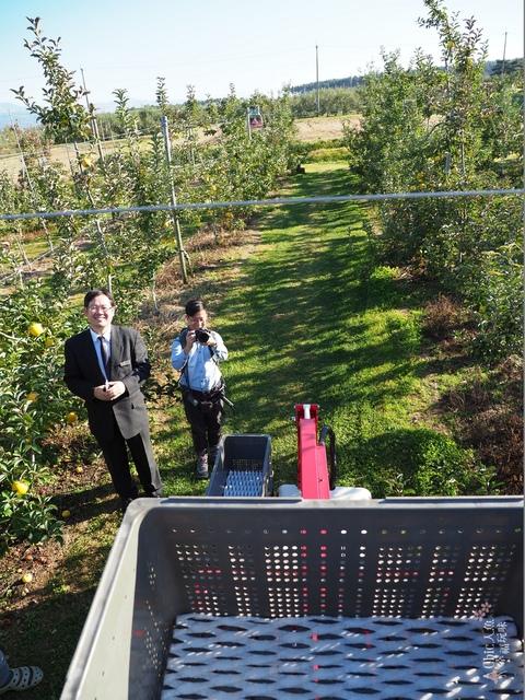 長野松川市東印平林農園採蘋果體驗 (87).jpg - 長野安曇野。東印平林農園蘋果園採蘋果りんご狩り