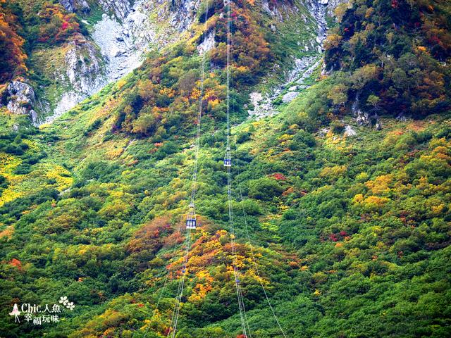 立山-6-搭纜車前往黑部平 (27).jpg - 富山県。立山黑部