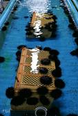 北海道道北。島旅。礼文島。剝海膽體驗:礼文島-剝海膽體驗 (20).jpg