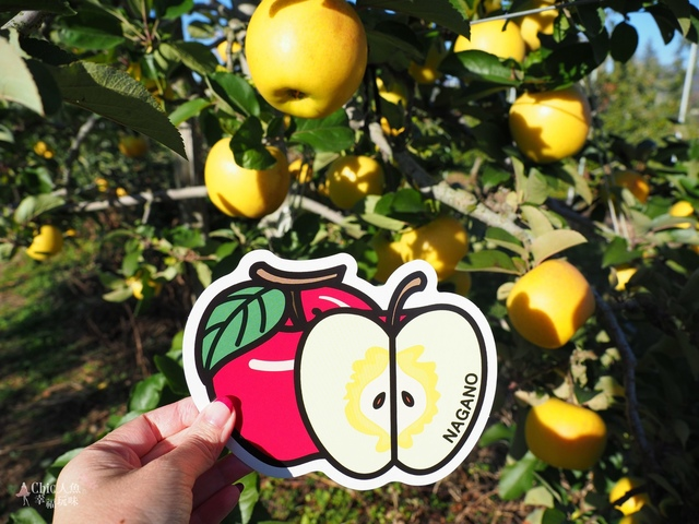 長野松川市東印平林農園採蘋果體驗 (104).jpg - 長野安曇野。東印平林農園蘋果園採蘋果りんご狩り