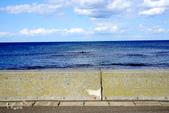北海道道北。島旅。礼文島:金田海岬-斑海豹曬日光浴 (8).jpg