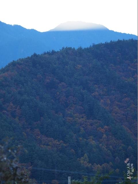 長野松川市東印平林農園採蘋果體驗 (188).jpg - 長野安曇野。東印平林農園蘋果園採蘋果りんご狩り