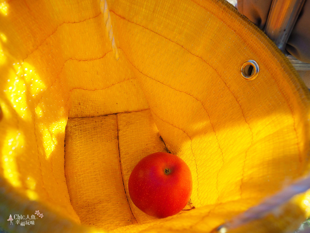 長野松川市東印平林農園採蘋果體驗 (143).jpg - 長野安曇野。東印平林農園蘋果園採蘋果りんご狩り