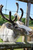 北海道道北。我在北緯45度遇見日本最北馴鹿TONAKAI牧場:北海道名寄馴鹿觀光牧場 (17).JPG
