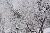 2013日本東北。藏王樹冰之旅:藏王山麓至樹冰高原-第一段 (46).j