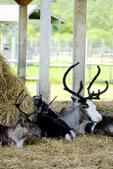 北海道道北。我在北緯45度遇見日本最北馴鹿TONAKAI牧場:北海道名寄馴鹿觀光牧場 (32).JPG