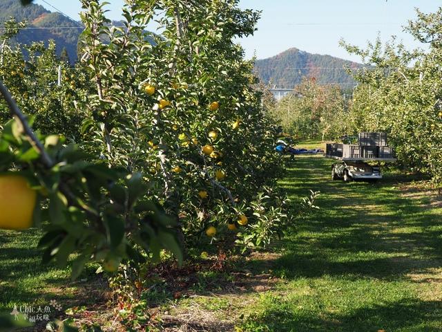 長野松川市東印平林農園採蘋果體驗 (108).jpg - 長野安曇野。東印平林農園蘋果園採蘋果りんご狩り