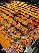 【國內旅遊】柿子紅了。最美的九降風橘@新埔衛味佳柿餅園:新埔衛味佳柿餅園 (106).jpg