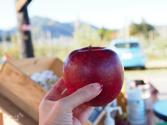 長野松川市東印平林農園採蘋果體驗 (153).jpg - 長野安曇野。東印平林農園蘋果園採蘋果りんご狩り