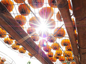 【國內旅遊】柿子紅了。最美的九降風橘@新埔衛味佳柿餅園:新埔衛味佳柿餅園 (98).jpg