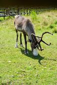 北海道道北。我在北緯45度遇見日本最北馴鹿TONAKAI牧場:北海道名寄馴鹿觀光牧場 (23).JPG