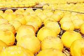 【國內旅遊】柿子紅了。最美的九降風橘@新埔衛味佳柿餅園:新埔衛味佳柿餅園 (120).jpg
