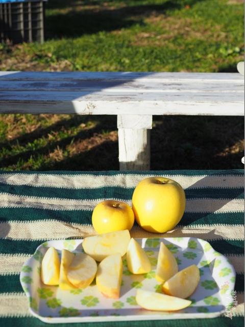 長野松川市東印平林農園採蘋果體驗 (164).jpg - 長野安曇野。東印平林農園蘋果園採蘋果りんご狩り