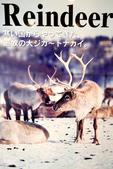 北海道道北。我在北緯45度遇見日本最北馴鹿TONAKAI牧場:北海道名寄馴鹿觀光牧場 (46).JPG