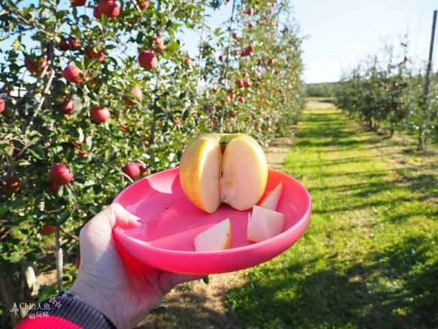 長野松川市東印平林農園採蘋果體驗 (22).jpg - 長野安曇野。東印平林農園蘋果園採蘋果りんご狩り