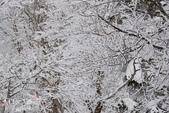2013日本東北。藏王樹冰之旅:藏王山麓至樹冰高原-第一段 (47).j