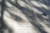 星のや富士VS赤富士:HOSHINOYA FUJI 星野虹夕諾亞富士-園區客房區 (76).jpg