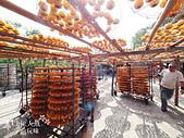 【國內旅遊】柿子紅了。最美的九降風橘@新埔衛味佳柿餅園:新埔衛味佳柿餅園 (100).jpg
