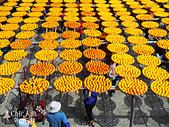 【國內旅遊】柿子紅了。最美的九降風橘@新埔衛味佳柿餅園:新埔衛味佳柿餅園 (79).jpg