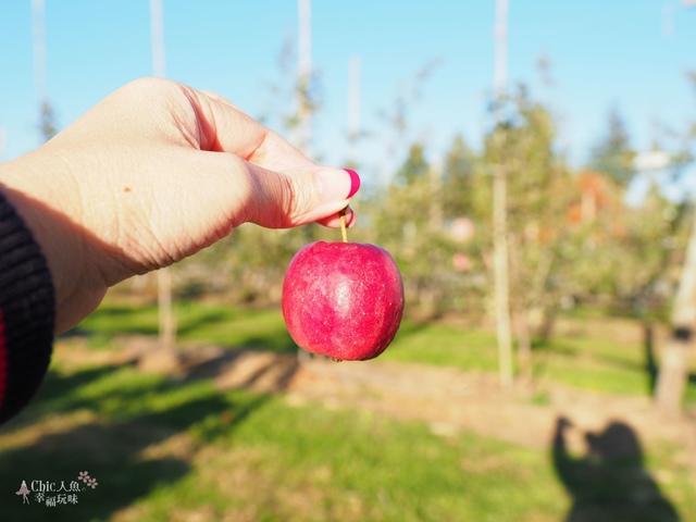長野松川市東印平林農園採蘋果體驗 (171).jpg - 長野安曇野。東印平林農園蘋果園採蘋果りんご狩り