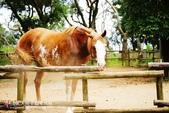 《新竹HOTEL》關西六福莊生態渡假旅館(食&宿:六福村野生動物園-關西六福莊秘探