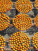 【國內旅遊】柿子紅了。最美的九降風橘@新埔衛味佳柿餅園:新埔衛味佳柿餅園 (64).jpg