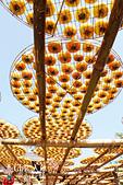 【國內旅遊】柿子紅了。最美的九降風橘@新埔衛味佳柿餅園:新埔衛味佳柿餅園 (126).jpg