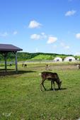 北海道道北。我在北緯45度遇見日本最北馴鹿TONAKAI牧場:北海道名寄馴鹿觀光牧場 (29).JPG